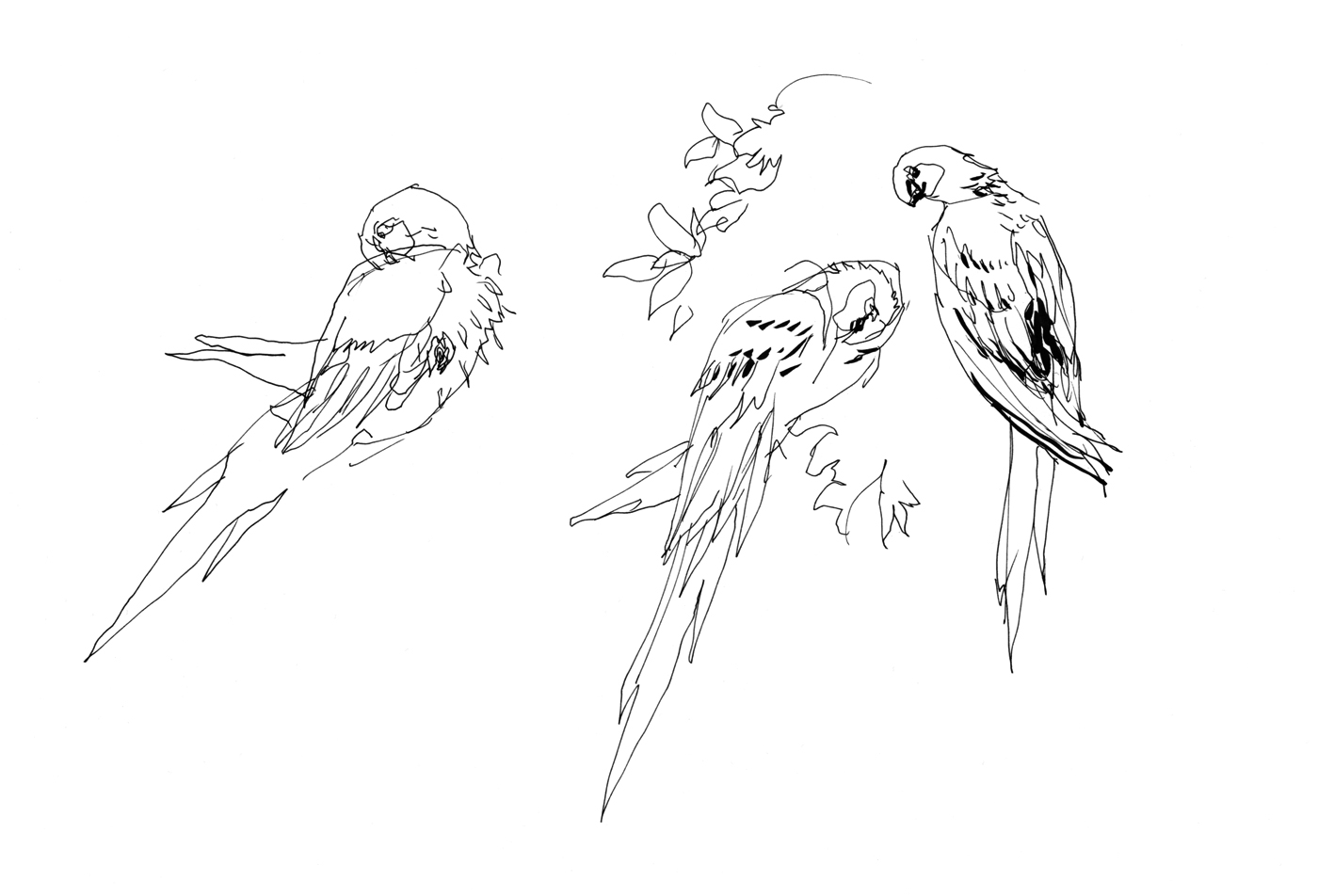sketching birds from life video demonstration citizen sketcher
