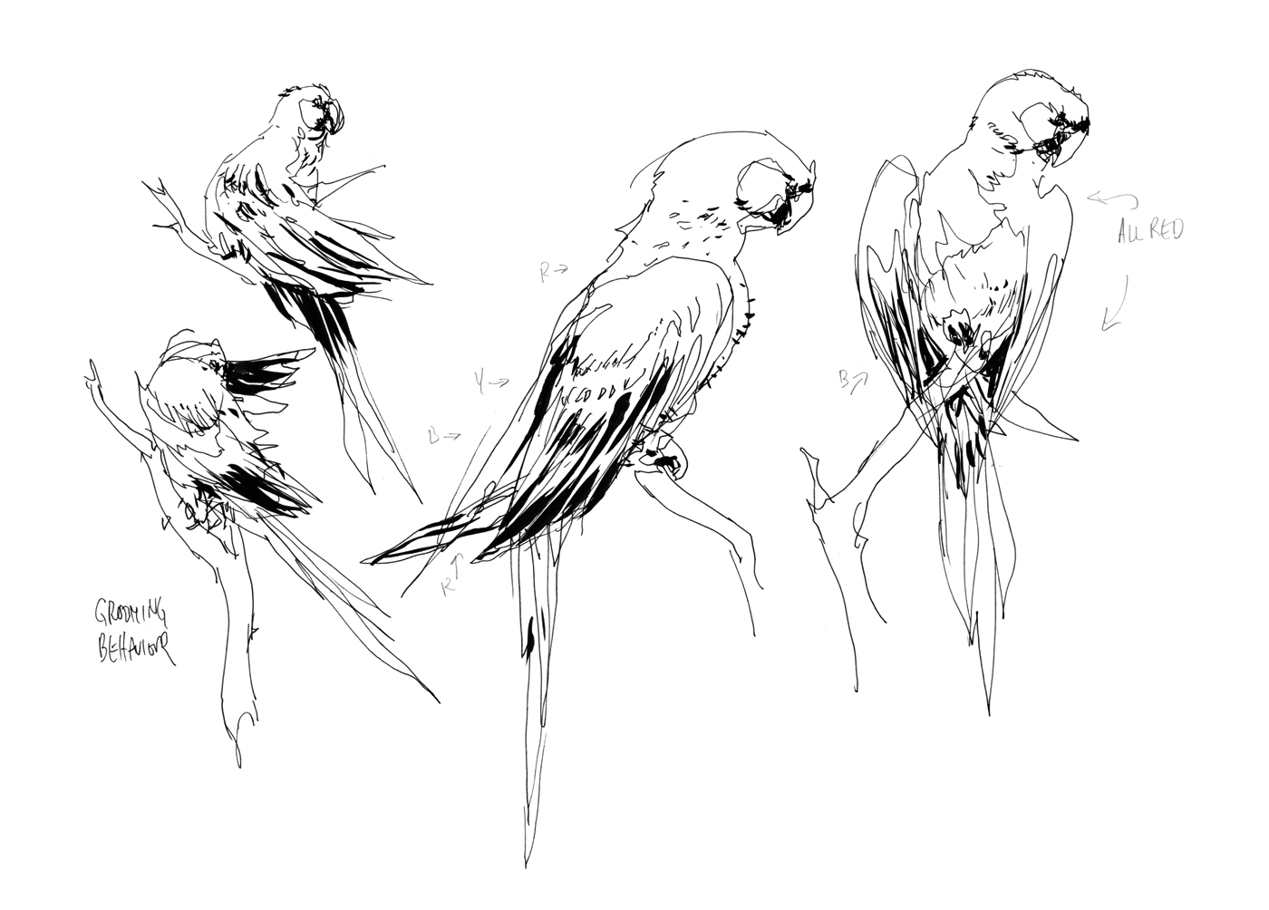 Line Art Of Birds : Gray and pink lineart florals birds holding vector image