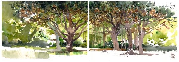 16June03_Botanical_Pines_Spread