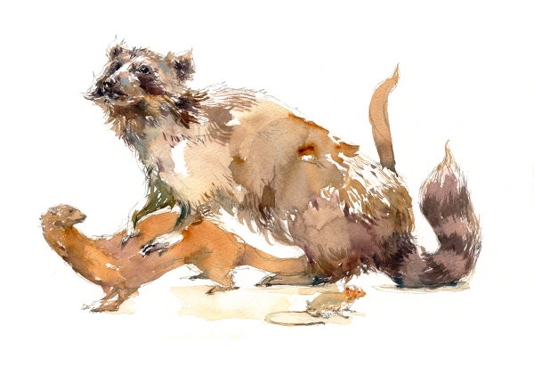 16dec15_marc-taro-holmes_-watercolor_taxidermy-raccoon