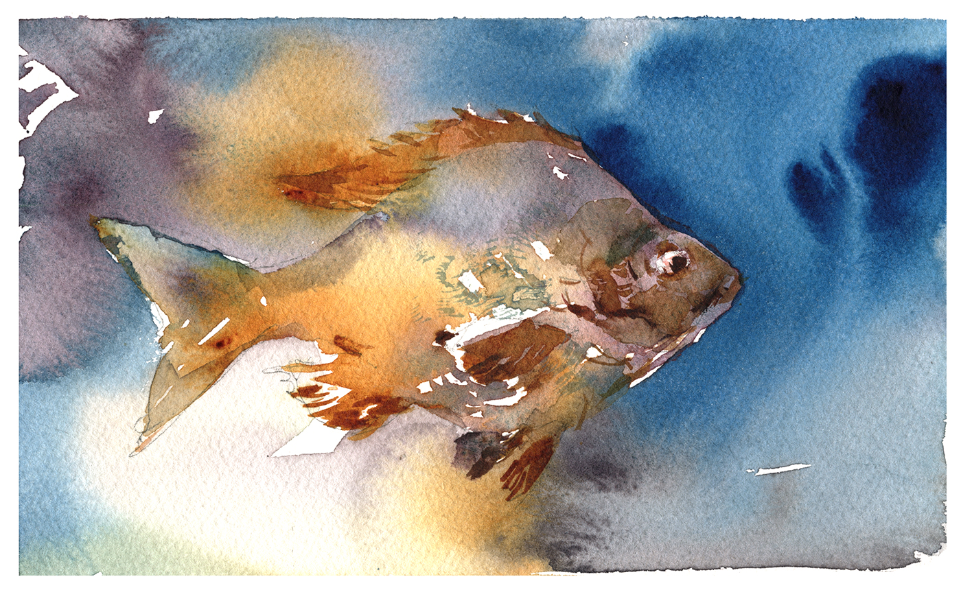Tasty Watercolor Fish In A Few Easy Steps